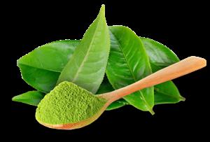 thermatcha cha verde
